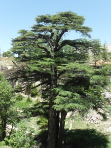 The Glory of Lebanon - used and abused since Sumerian times