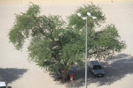 Kuwait, August 2013