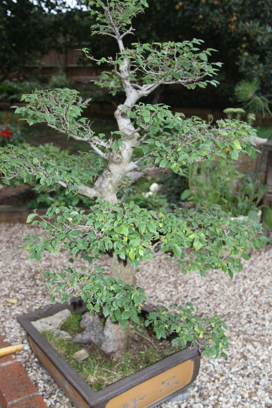 slowly, the novice begins to grasp the difference between topiary and bonsai...