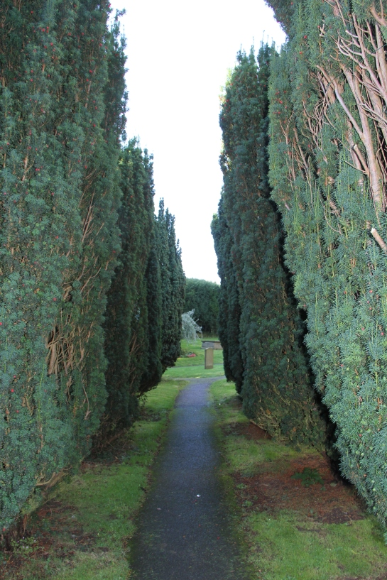 ...with yews, modern...