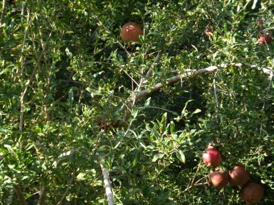Pomegranates...
